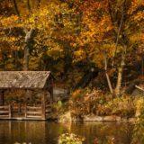 【恋人たちの予感】秋のセントラル・パークは、息をのむほど美しい。